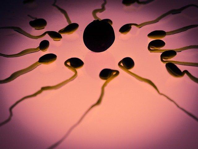 oplodnění vajíčka