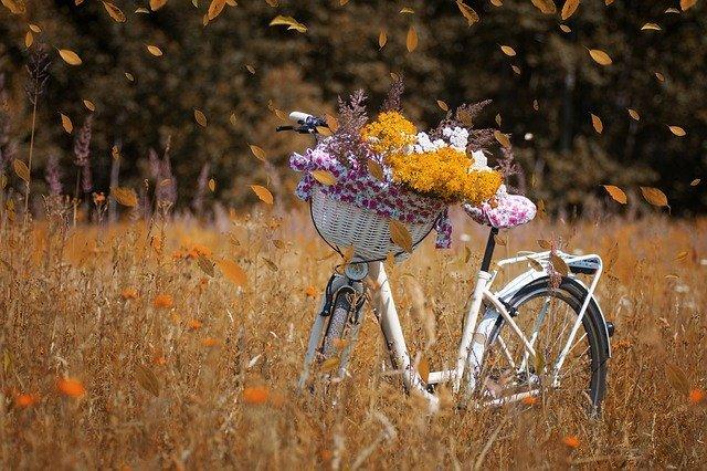 kolo na louce